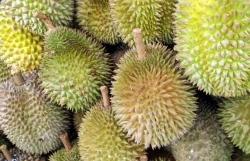 우리에게 생소한 특이한 과일들은?