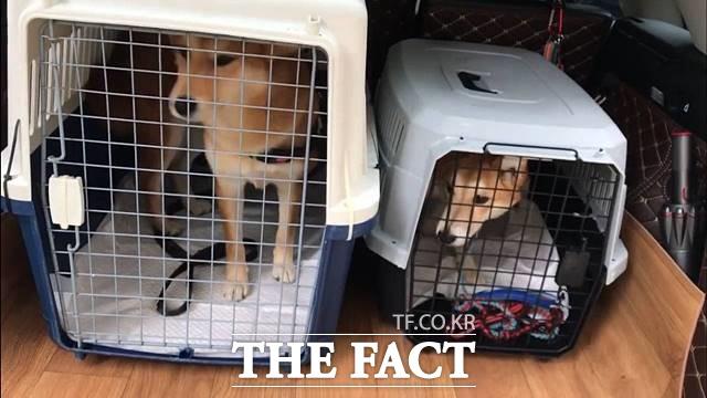 유기동물 중 대형견에 대한 잘못된 인식으로 국내 입양이 어려워 해외로 입양되는 개들이 있다. /독자 제공